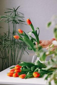 여자 손에 있는 귀중한 빨간 튤립 유럽 여성 꽃집은 튤립 꽃다발을 준비합니다