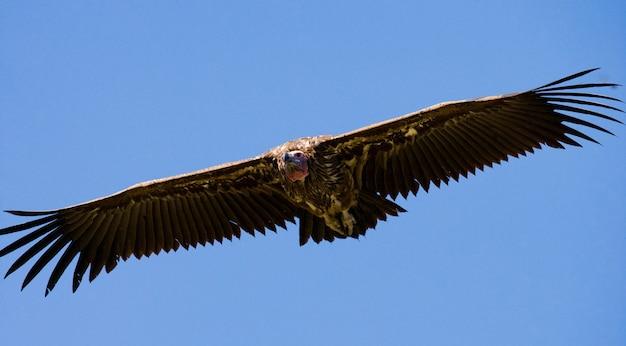 Хищная птица в полете кения танзания сафари восточная африка
