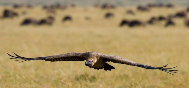 비행 중에 육 식 조류. 케냐. 탄자니아. 원정 여행. 동 아프리카.