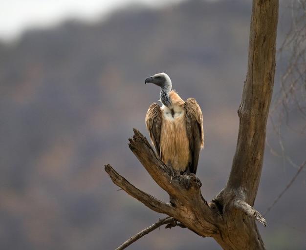Хищная птица сидит на дереве кения танзания сафари восточная африка