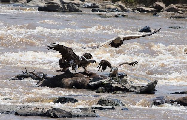 Хищные птицы в полете кения танзания сафари восточная африка