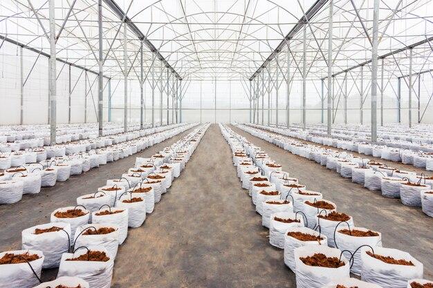 栽培用野菜のための温室の準備ココ泥