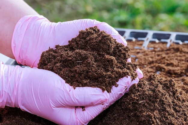 腐植土で満たされたプラスチック製の苗カセットにコショウの種子を播種するための準備。