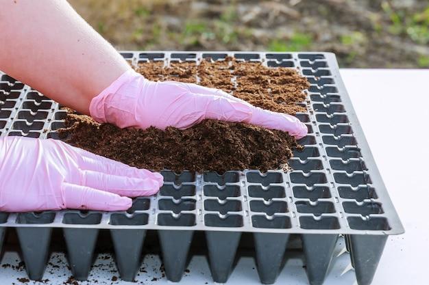 부식질 토양으로 채워진 플라스틱 묘목 카세트에 고추 씨앗을 파종하기위한 준비.