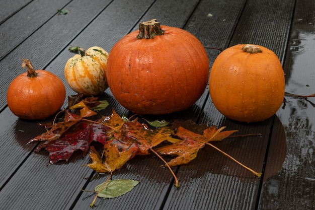Preparation for helloween ,pumpkins on wet decking with wet leafs and drops of rain