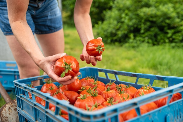 ファーマーズマーケット向けの有機野菜の準備