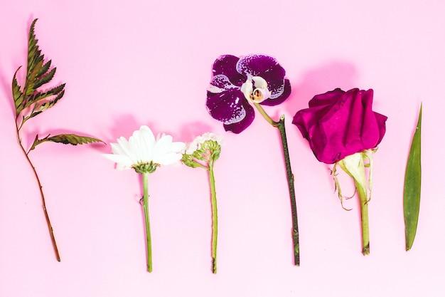 Подготовлены цветы для создания цветочной композиции на розовом фоне.