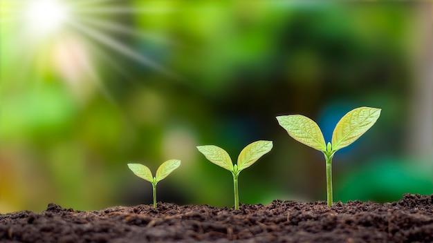 適切な外部環境での植物の発芽順序と植物の成長概念の提示。