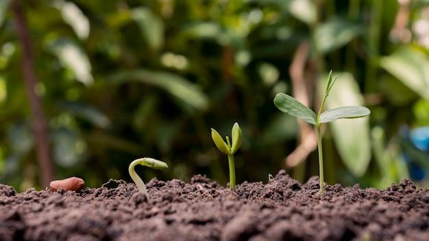 적절한 외부 환경에서 식물 발아 순서 및 식물 성장 개념의 프레젠테이션.