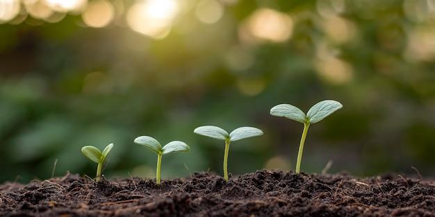 適切な外部環境での植物の発芽順序と植物の成長の概念の提示。