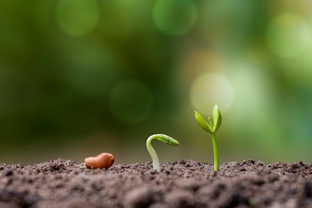 토양에서 자라는 식물의 발아 순서, 적절한 외부 환경에서의 식물 성장의 개념을 제시합니다.