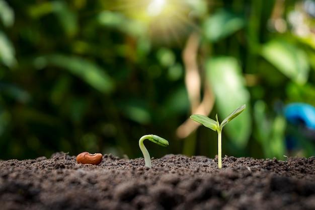 植物の発芽順序と植物の成長の概念に関するプレゼンテーション
