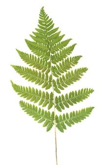 Прессованный сушеный гербарий летней травы изолированные