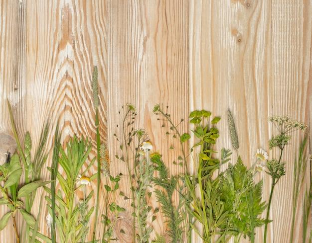 Прессованный сушеный гербарий различных растений. вид сверху