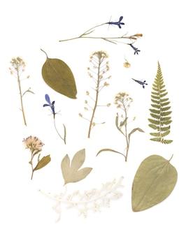 Прессованный сушеный гербарий различных растений
