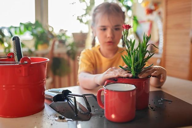 プレティーンの女の子が家で緑の花を赤いマグカップの鉢植えの緑の植物に植え替える家の花の装飾