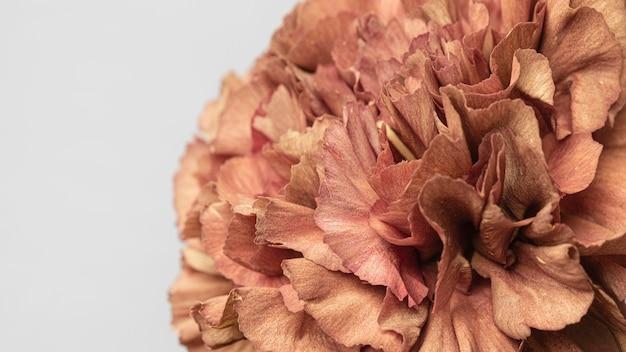 예쁜 피어 꽃 클로즈업