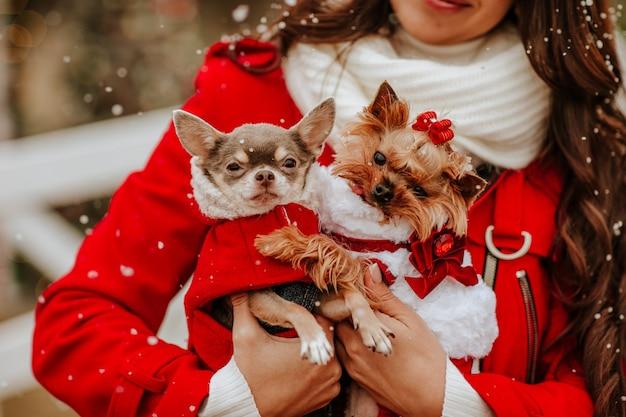 クリスマスの装飾に対してスタイリッシュな服を着たチワワとヨーキーを保持している赤い冬のコートと白いスカーフのかなりブルネットの女性。焦点は犬にあります。雪が降る。休日のコンセプト。