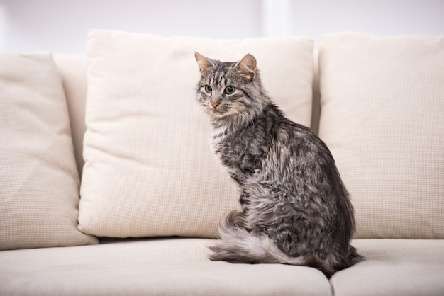 Pretty cat is sitting on a sofa.