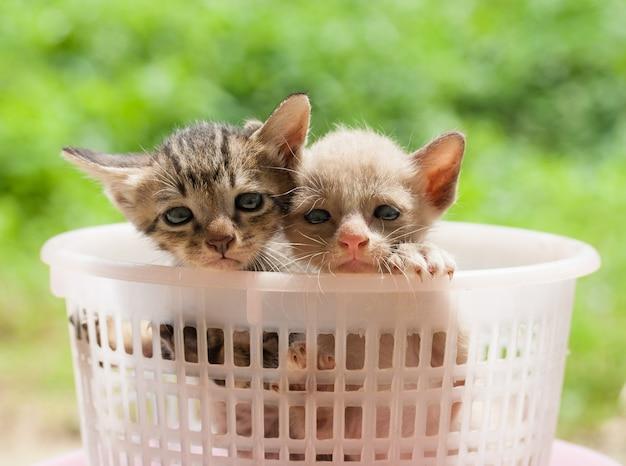 예쁜 고양이 새끼 고양이