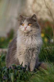 Pretty cute cat  is sitting on meadow