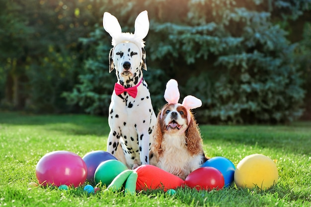 Pretty dogs friends at the easter egg hunt