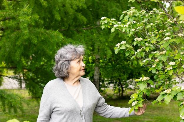 꽃이 만발한 나무 사이에서 공원을 산책하는 은퇴 연령의 예쁜 할머니. 할머니는 꽃이 만발한 나무를 보고 손에 꽃가지를 들고 있습니다.