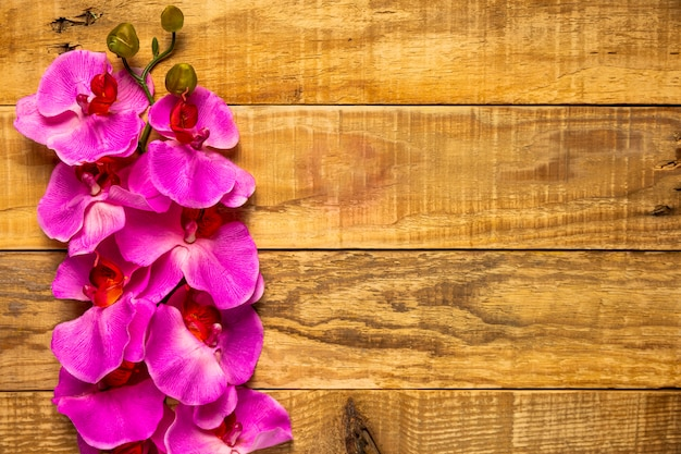 Pretty elegant pink flowers on wooden background