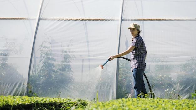 예쁜 농부는 온실 근처의 들판에 녹색 어린 묘목을 관개합니다.