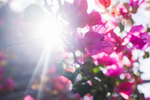 Pretty flowers with sun background