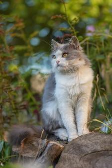 自然を楽しんでいるかなり幸せな猫。夏の日没でリラックスした若い猫。