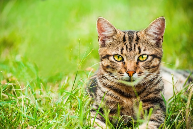 Pretty homeless cat with beautiful big eyes and leopard print lies in grass