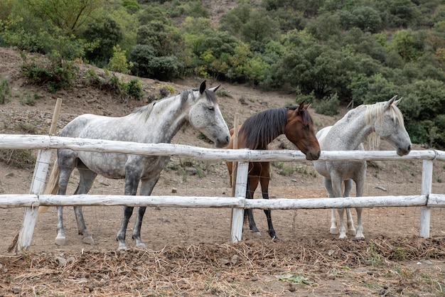 Pretty horses behind the fence