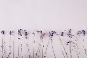 Pretty lavender onlilac background