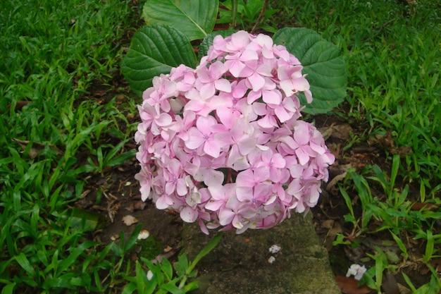 プリティライラックの花