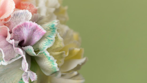 예쁜 매크로 피어 꽃