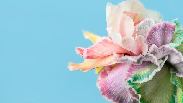 かなりマクロ咲いた花
