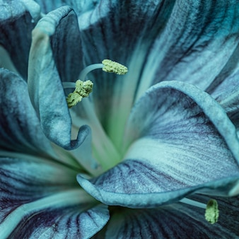 Fiore blu abbastanza macro