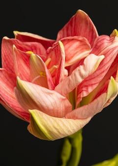 예쁜 매크로 복숭아 꽃