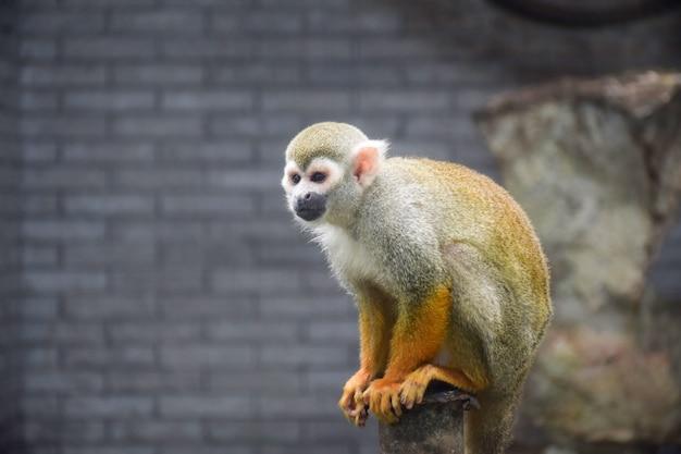 Piuttosto scimmia seduta su un tronco