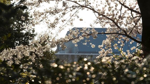 대낮에 도쿄의 예쁜 복숭아 나무 꽃