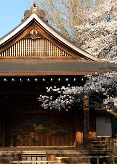 Pretty peach tree blossom in tokyo in daylight