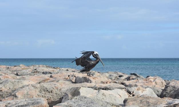 飛ぶために翼を羽ばたくかわいいペリカン