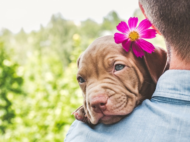 Pretty puppy of chocolate color with a bright flower on his head on a background of blue sky on a clear, sunny day.