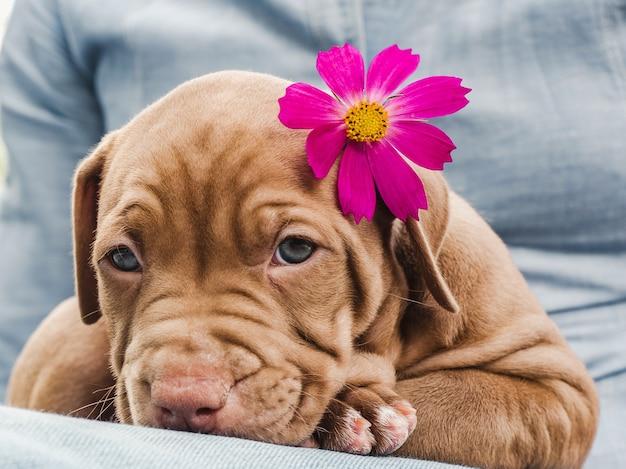 갈색의 예쁜 강아지. 클로즈업, 야외. 돌봄, 교육, 복종 훈련 및 애완 동물 기르기의 개념