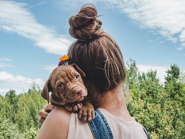 맑고 화창한 날에 푸른 하늘의 배경에 초콜릿 색상의 예쁜 강아지.