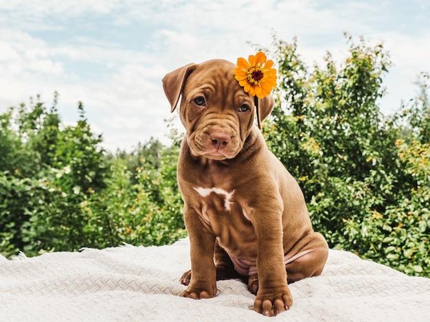 맑고 화창한 날에 푸른 하늘의 배경에 그의 머리에 밝은 꽃과 초콜릿 색상의 예쁜 강아지. 클로즈업, 야외. 돌봄, 교육, 복종 훈련, 애완 동물 기르기의 개념
