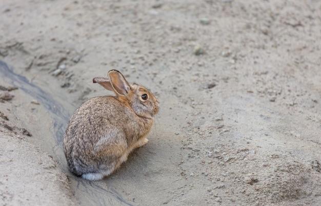 地上のかなり小さなウサギ