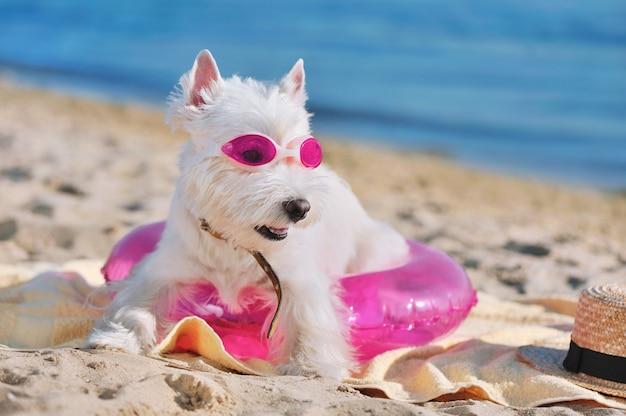 Довольно белая собака отдыхает на песчаном пляже