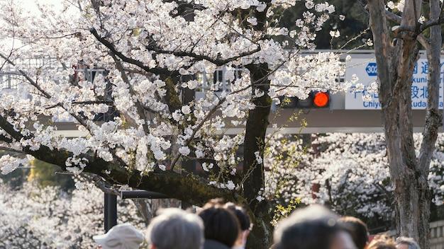 예쁜 흰 복숭아 나무의 꽃